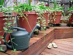 Ať chceme nebo ne, rostliny se v plastu tváří docela spokojeně.