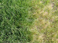 Rozdíl mezi hnojeným trávníkem a trávníkem trpícím nedostatkem dusíku je patrný na první pohled.