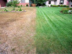 Rozdíl mezi zalévaným trávníkem a trávníkem bez zálivky může být markantní. Stačí pár skutečně teplých slunečných dnů.