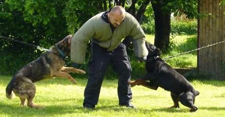 Služební psi jihomoravských policistů při výcviku