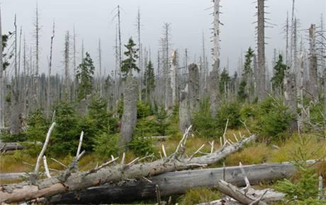 I takhle vypadají šumavské lesy. (foto: NP Šumava)