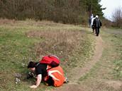 Rezervace Kamenný vrch u Brna s největším výskytem koniklece velkokvětého