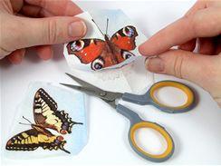 Motiv motýlka vystřihněte z ubrousku.