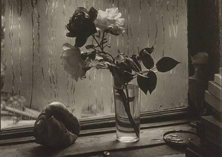 Josef Sudek; fotografie Poslední růže, rok 1956