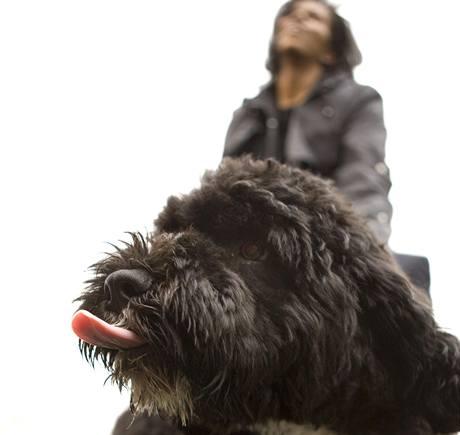 Rodina amerického prezidenta Baracka Obamy představila veřejnosti štěně Bo