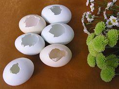 Připravte si prázdné skořápky s otvorem na boku a živé květiny.