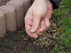 Prázdná místa dosévejte na jaře i kdykoliv během sezóny speciální regenerační směsí.
