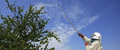 Stromy na Hustopečsku napadla nebezpečná housenka bekyně zlatořitná
