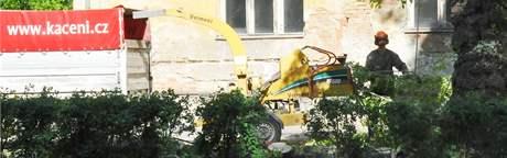 Kácení nebezpečného stromu ve dvoře Mětské správy sociálního zabezpečení na ulici Veveří v Brně