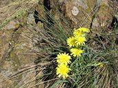 Květena na hadcových skálách
