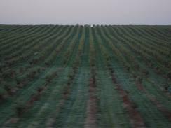 Šedivec, šedivák neboli jinovatka na trávníku byla pro piloty indikátorem, na která místa v sadu se zaměřit. V údolí bývá samozřejmě po ránu nižší teplota než na kopci.