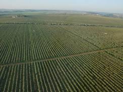 350 ha ovocného sadu je pořádné sousto, vyžadující špičkovou péči.