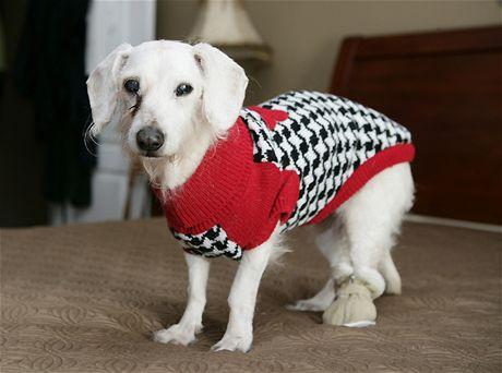 Chanel, nejstarší pes světa, se dožil 21 let (6. května 2009)