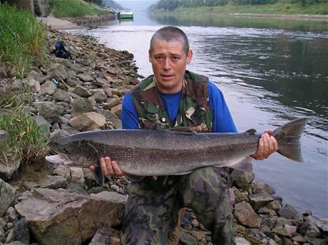 Lososa obecného délky 104 cm  chytil L. Mervínský u soutoku Labe s Kamenicí v červenci 2006.