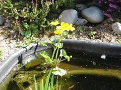 Rostliny se sázejí do vylisovaných kapes