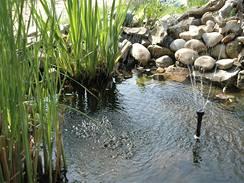 K jezírku patří i vodotrysk, který okysličuje vodu