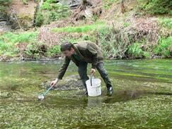 Vypouštění plůdků lososa do řeky Kamenice v Národním parku České Švýcarsko 4. 5. 2009.