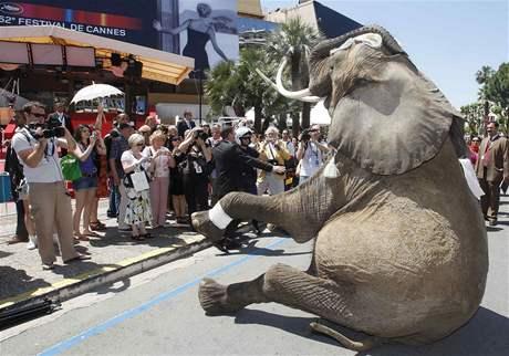 Cannes 2009 - slon na Croisette