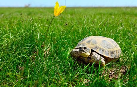 Želvy někdy utečou