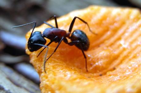 Mravenci na stromech
