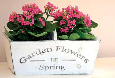 """I květiny se musely """"poangličtit"""""""