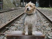 Z filmu Muž a jeho pes