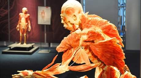 Kolekce skutečných lidských těl Bodies Revealed v brněnském nákupním a zábavním centru Olympia