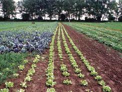 Podle požadavků zákazníků si naplánuje farmář sadbu na další sezonu