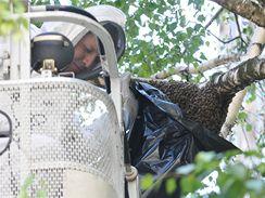 Hasiče v Brně zaměstnal včelí roj na Veveří ulici