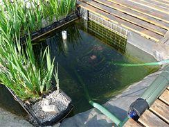 Špinavá voda vtéká do kořenové čističky.