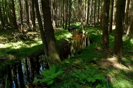 Český les, okolí Lesné - Hraniční potok