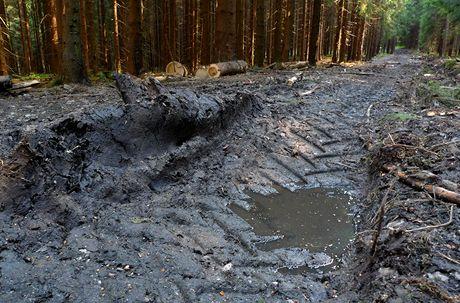 Český les, okolí Lesné - cesta mezi Zlatým a Celním potokem