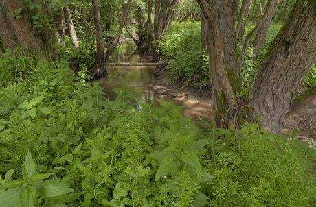 Bílý potok (Bítýška)