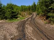 Český les - těžařské firmy ničí lesní cesty