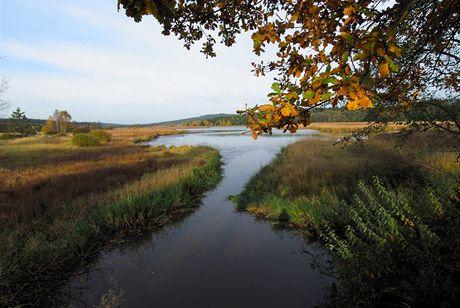 Brdy, spodní Padrťský rybník, ráj ryb i vodního ptactva