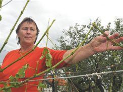 Obyvatelé vesnice Derflice na Znojemsku dnes ráno sklízeli obrovské množství velkých krup. Ty mnohým totálně zničily zahrady a vinice.