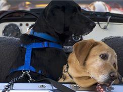 Cestou psovi dělejte přestávky, při kterých se napije, vyvenčí i proběhne.
