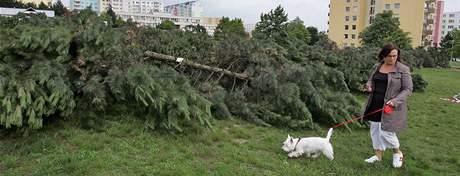 Brněnský magistrát vydal povolení k okamžitému vykácení stromů v Líšni