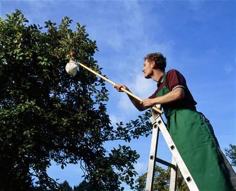 Po dlouhotrvajících deštích obejděte ovocné stromy a nekompromisně všechno ovoce i listy s náznakem hniloby či plísně. Zachránítetak podstatnou část budoucí úrody.