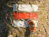 Červená turistická značka přilákala i babočku admirála.