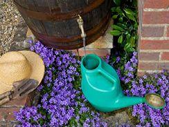 Dešťovou vodu chytejte do sudu. Na zalévání záhonů je ideální a ještě ušetříte.