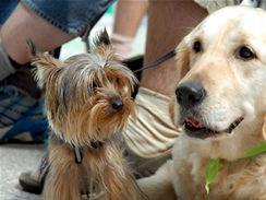 INTERCANIS - mezinárodní výstava psů
