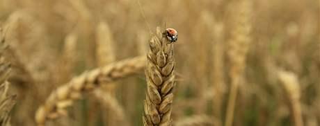 Počasí dělá zemědělcům na jižní Moravě vrásky