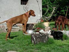 Většina psů je schopna bezproblémového soužití