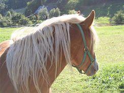 Pastvina je pro koně to nepřirozenější prostředí, tak proč je na pastvině rovnou neustájit?