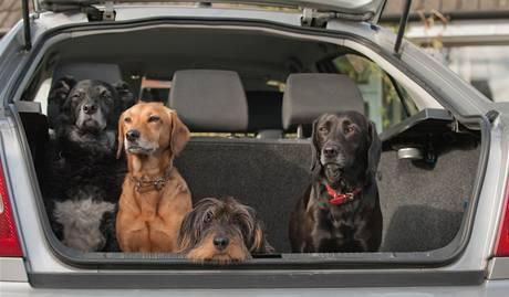 Se psem v autě je třeba dělat častější přestávky