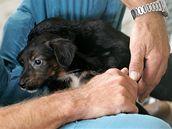 Den otevřených dveří v útulku pro opuštěná zvířata v brněnské Bystrci