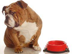 Pes a jeho miska