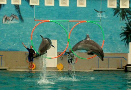 Delfíni v Kislovodsku skáčou do výšky pět metrů a hrají košíkovou