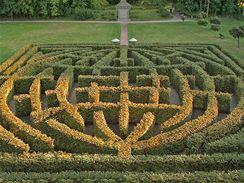 V Brandýse nad Orlicí použili k vytvoření labytintu habry bludištní. Necelých 6 let od výsadby už dosahují 2,5 m výšky